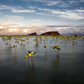 Biri by Ruel Tafalla - Landscapes Waterscapes
