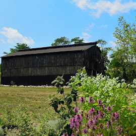 Tobacco Barn by Lorna Littrell - Buildings & Architecture Other Exteriors ( barns, landscapes, wooden structures )