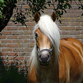Beautifull horse by Joyce Dales - Animals Horses