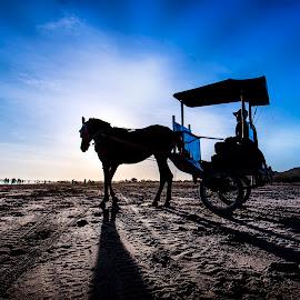 Siluet by Muhammad Yoserizal - Animals Horses