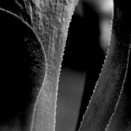 Through The Looking Glass by Mary Gerakaris - Nature Up Close Other plants ( patterns, macro photography, black and white, abstract photography, botanical patterns )
