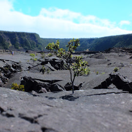 Kiluea Iki Crater by Jeff Juntilla - Landscapes Travel ( hawaii, volcanoes, fujifilm, hiking, travel, national parks )
