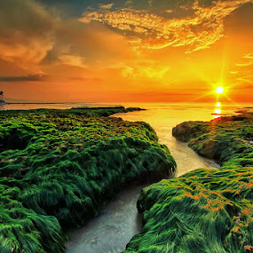 Mostly Moss by Agoes Antara - Landscapes Sunsets & Sunrises