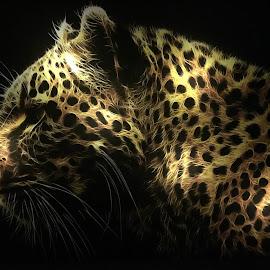 by Anja Kroes - Digital Art Animals