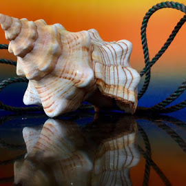 shell and rope by Janette Ho - Artistic Objects Still Life