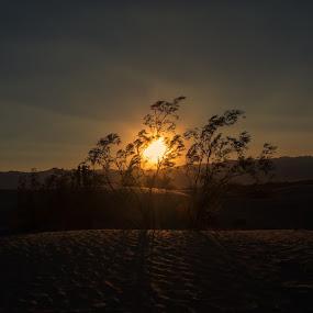 Sand Dunes Sunset by Sam De Block - Landscapes Sunsets & Sunrises ( death valley, sand, sunset, nevada, usa )