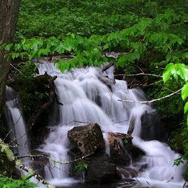Smoky Mountain Waterfall by Brian Lord - Landscapes Waterscapes ( creek, waterfall, tennessee, woods, smoky mountains )