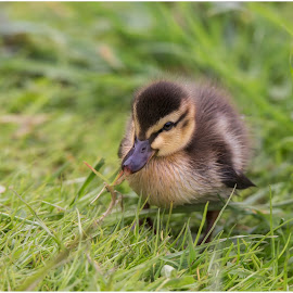the little duck by Jana Vondráčková - Uncategorized All Uncategorized