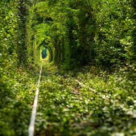 Love tunnel by Viorel Stanciu - Nature Up Close Trees & Bushes ( green, summer, train, lines, tunnel )