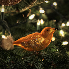 Golden . . . by Patti Westberry - Public Holidays Christmas ( bird, tree, ornament, christmas, gold )
