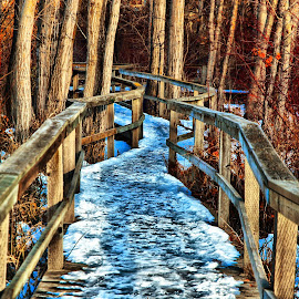 The Trail by Don Mann - City,  Street & Park  City Parks ( walking, photograph, photographs, don, colorful, sanctuary, pictures, vibrant, north, pretty, digital, hiking, photography, boardwalk, southern, nature, trail, digital art, dark, path, photographer, east, nature trail, light, bc, british columbia, pathway, canada, beautiful, image, photo, northern, picture, photos, color, peachland, canadian, south, okanagan valley, images, mann, walk, natural, west, hike )
