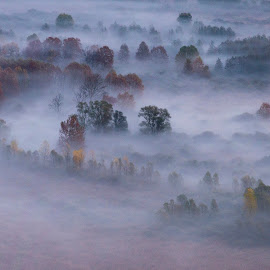 Trees in the morning mist by Pietro Ebner - Landscapes Prairies, Meadows & Fields ( foggy, tree, fog, trees, morning, mist )