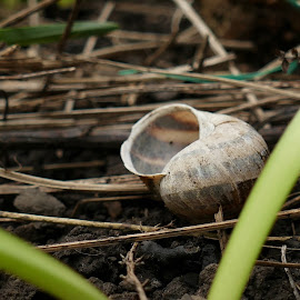 Empty snail shell  by Andy Bampton - Nature Up Close Other Natural Objects