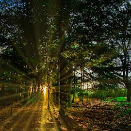 Bosco by Stefania Loriga - Nature Up Close Trees & Bushes ( bosco,  )