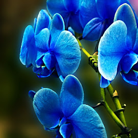 ELEGANCE by Nihan Bayındır - Nature Up Close Gardens & Produce ( love, nature, orchid, fresh, colors, lovely, passion, flower )