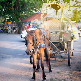 Kereta Kuda Ganu by Moment Kita - Animals Horses ( malaysia, kuala lumpur, portrait, terengganu, landscape )