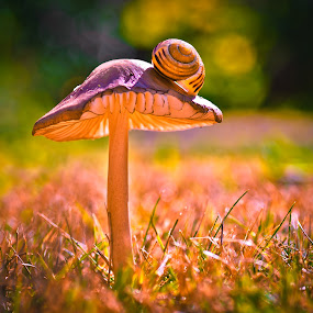 by Darrell Raw - Nature Up Close Mushrooms & Fungi
