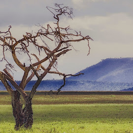 alone by André Figueiredo - Landscapes Prairies, Meadows & Fields