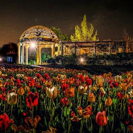 Sunken Gardens by DE Grabenstein - Flowers Flower Gardens