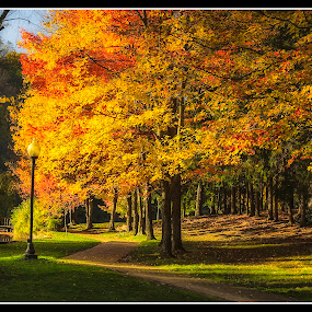 Evening Stroll by Michael Mounts - City,  Street & Park  City Parks ( water, park, fall, leaves )