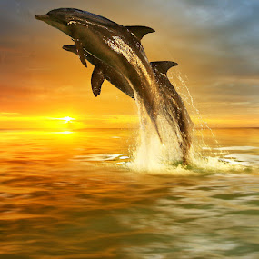 Over the Sunset by Alit  Apriyana - Animals Other Mammals