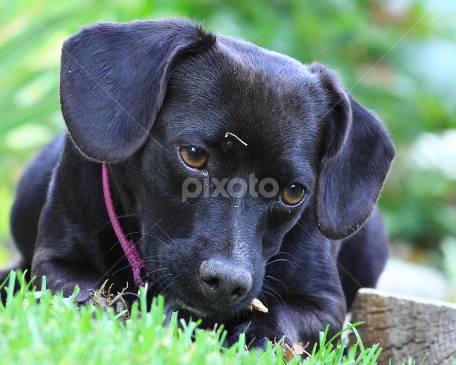 Rue by Brian Robinson - Animals - Dogs Portraits (  )
