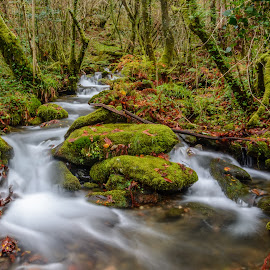 Rio en Fragas do Eume by Cesar Crusat - Landscapes Forests ( rio, galicia, eume, pontedeume, fragas, coruña, fragas do eume, relax, tranquil, relaxing, tranquility )