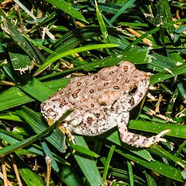 by Steve Wieseler - Animals Amphibians