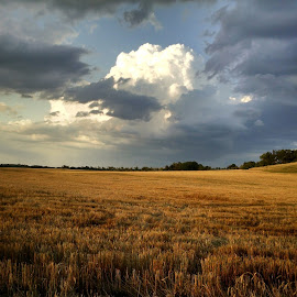by Jim Bailey - Landscapes Prairies, Meadows & Fields