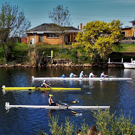 Bairnsdale Rowing Regatta by Sarah Harding - Novices Only Sports ( rowing, novices only, sport, boat, competition )