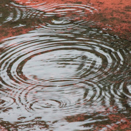 puddlescapes by Radhika Aswin - Nature Up Close Water