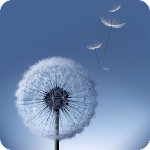 Dandelion Wllpapers Icon