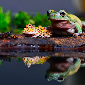 Two frogs by JudiEndjun Ultrasound - Animals Amphibians
