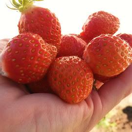 by Liz Huddleston - Food & Drink Fruits & Vegetables ( strawberries, harvest, garden )