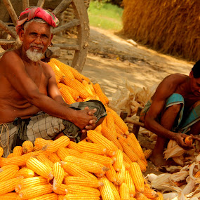 The Corn Family by Shadat Hossain - News & Events World Events ( bangladesh,  )