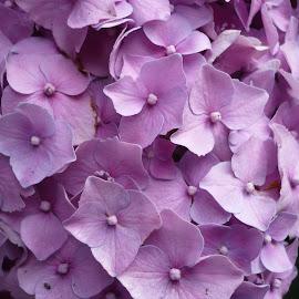 macro flowers by Drago Ilisinovic - Novices Only Macro