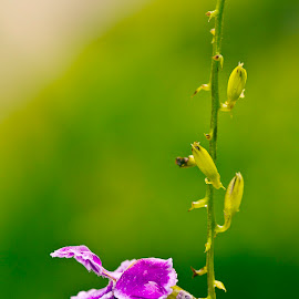201711051153 Macro of Tiny Flower by Steven De Siow - Nature Up Close Gardens & Produce ( macro, macro flower, macrophotography, macro photography, flower )