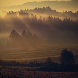 *** by Katka Kozáková - Landscapes Forests ( forest, morning, light, shadows,  )
