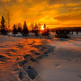 Edmonton City Park by Joseph Law - City,  Street & Park  City Parks