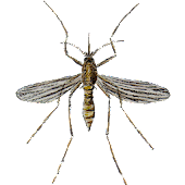 Game Mosquito apk for kindle fire