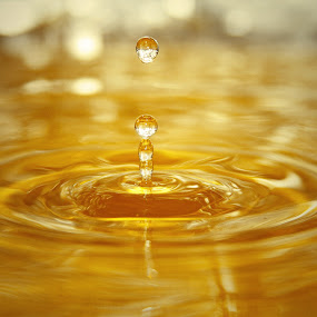 Bounce by Aaron Shaver - Nature Up Close Water ( water, macro, drop, mood, action, ripple, gold, light, bokeh, bounce )