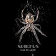 Spider Animal Wallpaper
