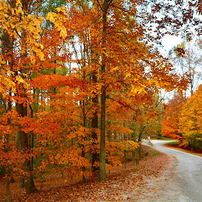 by Victoria Eversole - Landscapes Forests ( forests, fall colors, colors, landscapes )