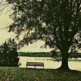 Bench in the park by Jessica Rose - Landscapes Prairies, Meadows & Fields ( sitawhile, bench, tennessee, relax, tn, river, park,  )