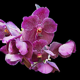 ORCHID by Kamal Mallick - Instagram & Mobile Android ( flower nature, orchids, flower closeup, flower, flower photography, flowers photo )