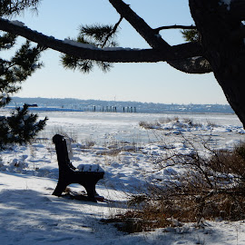 View From the Bench in Winter by Kristine Nicholas - Novices Only Landscapes ( icy, bench, waterscape, marsh, ocean, beach, landscape, pilings, cold, tree, shadow, ice, snow, bush, pier, water, estuary, riverway, sea, snowy, seascape, shadows, winter, wetlands, bushes, reservation, trees, brush, waterway, river )