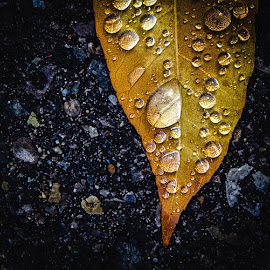 Leaf by Dorothy Day - Nature Up Close Leaves & Grasses ( autumn, leaf, waterdrops, closeup )