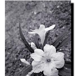 by J W - Black & White Flowers & Plants