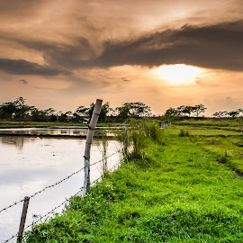 Greenfield by Ynon Francisco - Landscapes Prairies, Meadows & Fields ( clouds, grassland, farm, sky, paddies, sunset, meadow, ricefield, philippines, tarlac,  )