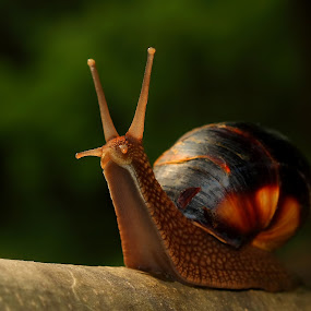 Snail in fairy tale forest by Reinhard Latzke - Animals Other ( fairy tale, romantic, forest, snail )